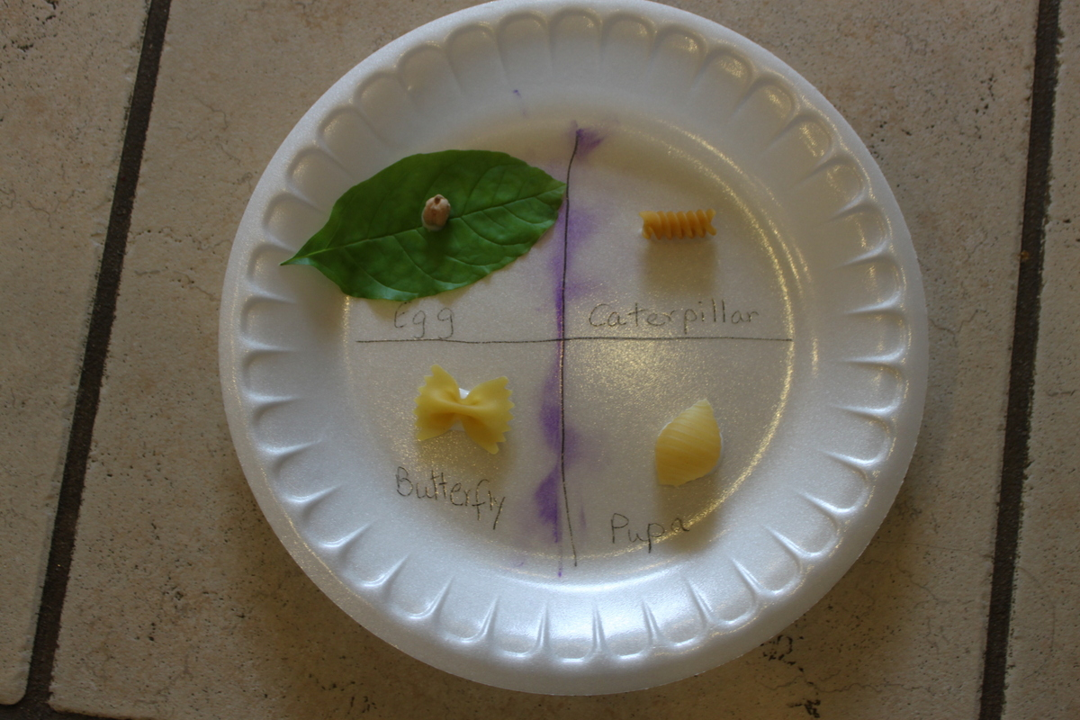 The Very Hungry Caterpillar Activities For Preschool And Kindergarten Includes Sequencing Lesson Plans
