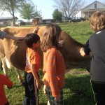Petting the cow at Brown's Dairy Farm